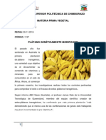 Platano genéticamente modificado