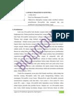 Laporan Praktikum Genetika Tata Cara Menangani Drosophila, Pengamatan Siklus Hidup Drosophila, Determinasi Drosophila, & Pengenalan Mutan Drosophila
