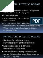 Anatomia Del Intestino Delgado