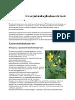5 Dintre Cele Mai Puternice Plante Medicinale