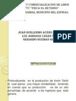produccionycomercializaciondelimontahyty-131104174819-phpapp02.pptx