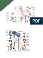 Sistema Nervioso Centarl