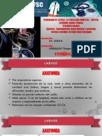 seminario otorrinolaringologia.pdf