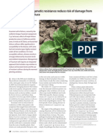 Crop Rotation and Genetic Resistance Reduce Risk of Damage From Fusarium Wilt in Lettuce