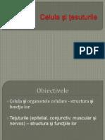 CELULA~1 (1)