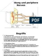10 Plexus Cervicalis Und Brachialis