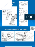 4. Cronometria dentaria