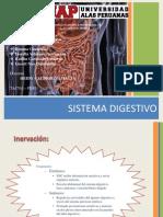 Inervacion Del Sistema Digestivo