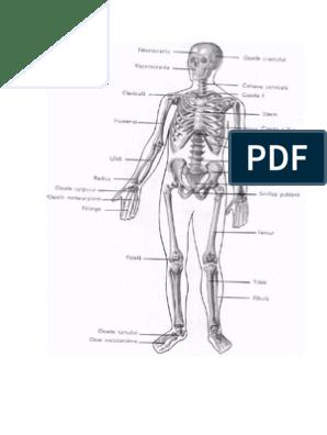 tratamentul rupturii cornului meniscului articulației genunchiului