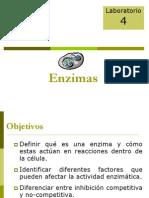 Informe sobre enzimas