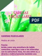 Cadenas Muscular Esy Mtm