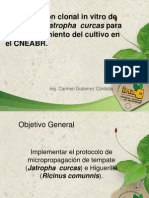 Presentacion biotecn jatrofa