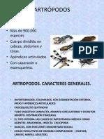 Atropodos Piojos y Pulgas.pptx