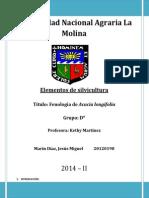 Fenología de Acacia longifolia (Mimosa)