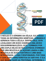 Evolução Do Dna Humano