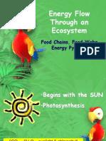 Biology II - Ecology - Ecosystem Energy Flow