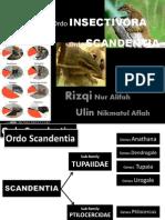 order Scandentia