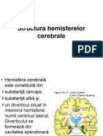 Structura hemisferelor cerebrale