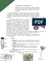 Filo Equinodermata - Resumo