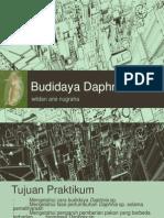Budidaya Daphnia