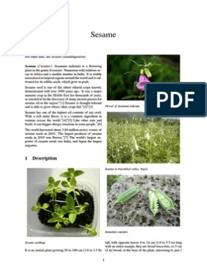 Sesame seeds pdf | Sesame | Allergy
