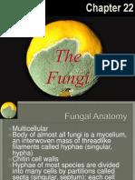 fungi-apbio-1204208133234612-5