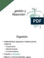 Digestión y Absorcion