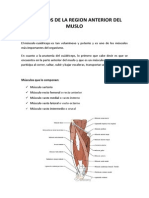 Musculos de La Region Anterior Del Muslo