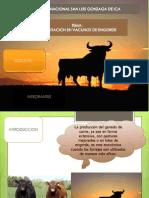 alimentacion en vacuno de engorde.pptx