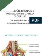 Cabeza y Cuello_irrigación, Drenaje e Inervación