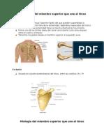 Osteologia y Miologia ANATO