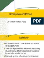 Terminología Anatómica