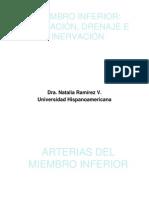 Miembro Inferior_ Irrigación, Drenaje e Inervación