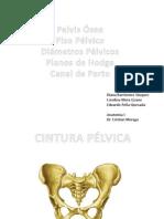 Pelvis Lab