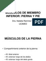 Miembro Inferior_miología 3