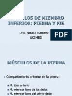 Músculos de Miembro Inferior_pierna y Pie