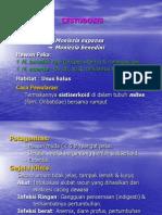 2.Cestodosis (Cacing Pita )