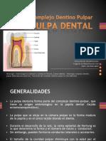 histologia dentaria pulpa dental