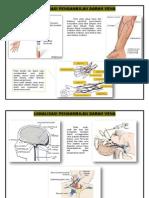 lokalisasi pengambilan darah vena