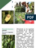 Análisis Del Entorno Propio Aguacate Ecuatoriano