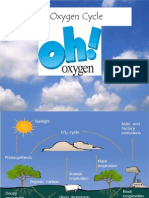 4. the Oxygen Cycle