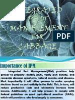 IPM IN CABBage.pptx