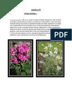 Botanica Practica #8