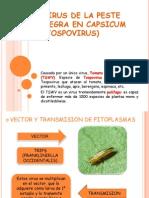 Exposicion Fitopatología II