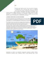 Contamina   La Biomasa