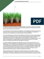 sistema-experto-para-aumentar-productividad-de-cana-de-azucar-.pdf