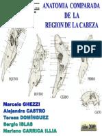 Cabeza Osea(2)
