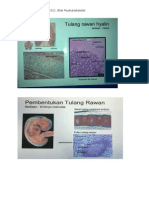 histologi muskulo_2