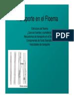 Transporte Floema-2