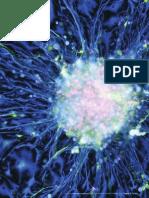 49345253-Celulas-Madres-Un-creciente-conocimiento-en-el-campo-de-los-estudios-neurotoxicologicos.pdf